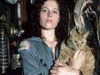 Uno de los gatos más famosos del cine: Jones, de 'Alien' (Ridley Scott, 1979). Curiosamente, el alienígena atacaba a los humanos, pero no al felino.