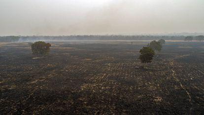 Queimada devasta floresta nas proximidades de Cuiabá.