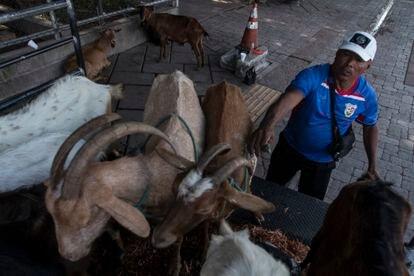 O pastor Jorge Ovidio com suas cabras no centro de San Salvador.