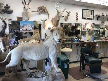Barbearia aonde Karkoc costuma ir e que exibe os troféus de caça do dono.