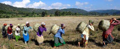 Mulheres da tribo Tiwa transportam Maiphurs (bolsas de arroz) em sua fazenda no distrito de Karbi Anglong, no estado de Assam (Índia).