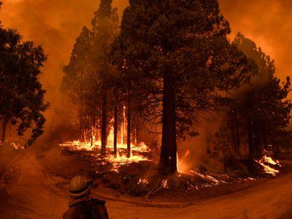 Incêndio em floresta de sequoias na Califórnia, no final de setembro.