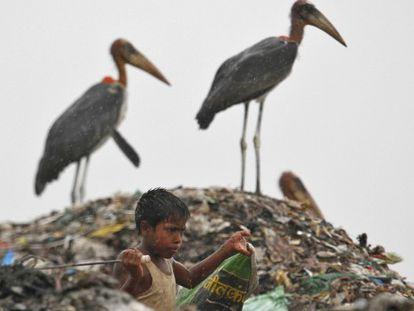 Uma criança, em um lixeiro em Guwahati, Índia.
