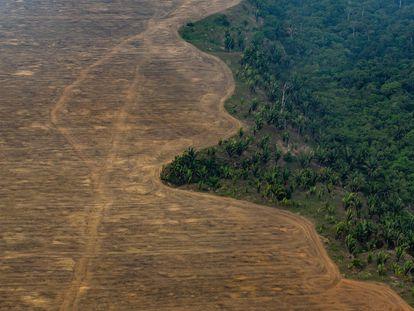 Uma área da floresta amazônica desmatada para plantar soja perto de Porto Velho (RO), em 2019.