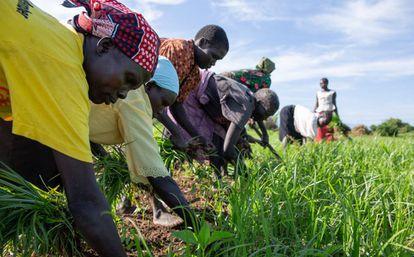 Agricultores trabalhando em Torit (Sudão do Sul)