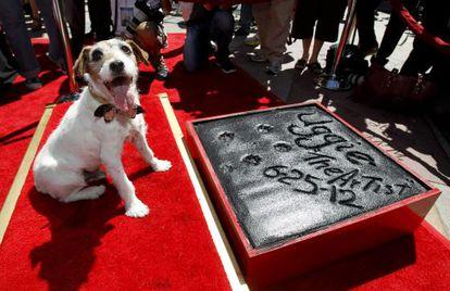 'Uggie', depois de deixar suas impressões no Teatro Chinês Grauman de Hollywood.