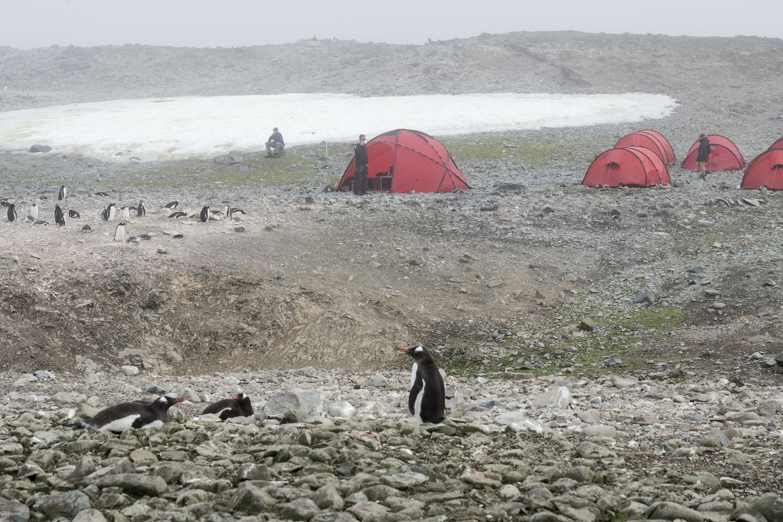 Acampamento numa ilha na Antártida onde não existe registro de que alguém tenha dormido antes.