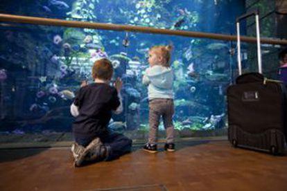 Crianças no grande aquário do aeroporto de Vancouver (Canadá).