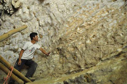 Um dos membros da equipe observa o mural encontrado em Sulawesi (Indonésia)