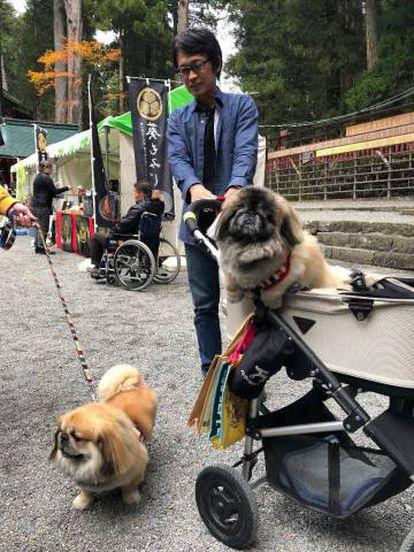 Um jovem japonês passeando com seu cachorro-bebê em um carrinho de bebê.