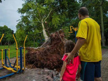 Pai e filha observam uma árvore caída na zona oeste.