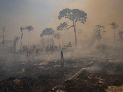 Depois de degradadas, as porções remanescentes de floresta ficam ainda mais expostas a incêndios, como o ocorrido próximo a Novo Progresso, no Pará, em agosto passado.