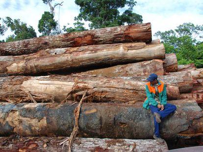 Desmatamento pode reduzir pela metade a biodiversidade de uma floresta.