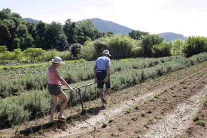 Casal gaúcho recebe aposentadoria rural, mas continua trabalhando em horta para complementar a renda.