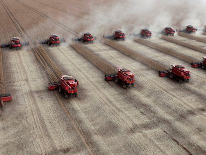 Trabalhadores colhem soja em uma fazenda na cidade de Tangará da Serra, no Mato Grosso.