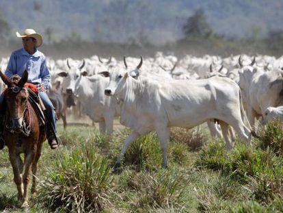 Criação de gado em São Félix do Xingu, no Pará.