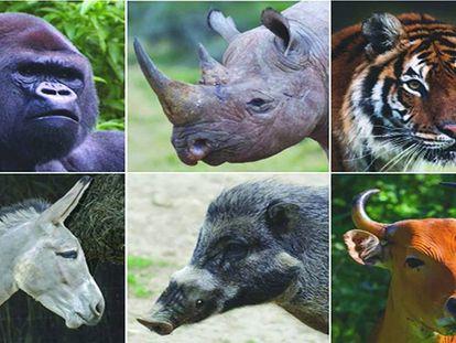 A Terra poderia ficar sem seus grandes mamíferos.