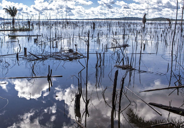 Os 'paliteiros' de árvores mortas marcam a paisagem do rio Xingu depois de Belo Monte.