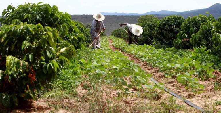 Trabalhadores rurais na Bahia, neste ano.