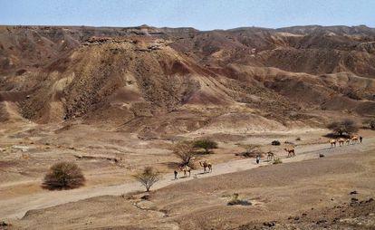 Uma caravana de camelos atravessa a região de Lee Adoyta, onde, em janeiro de 2013, um estudante encontrou a mandíbula.