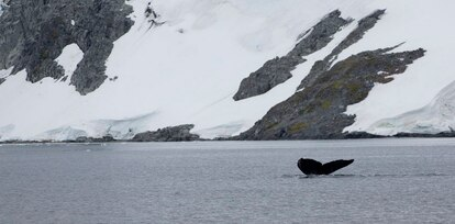 Trinity Island, na Antártida.