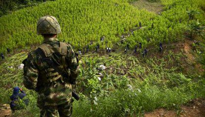Erradicadores de cultivos de coca em Antioquia
