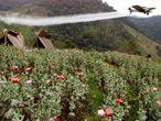 Un avión fumiga con Glifosato una plantación de El Silencio (Colombia) en una campaña contra la droga, en marzo de 2002.