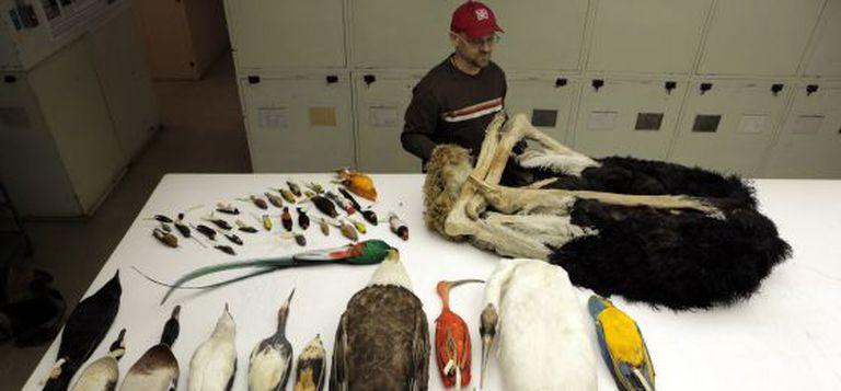 Algumas das espécies analisadas no estudo genético.