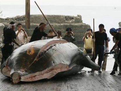 Primeiros navios baleeiros já zarparam, com a meta de abater 227 cetáceos até o final do ano