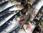 Las sardinas  protegen de las enfermedades cardiovasculares.