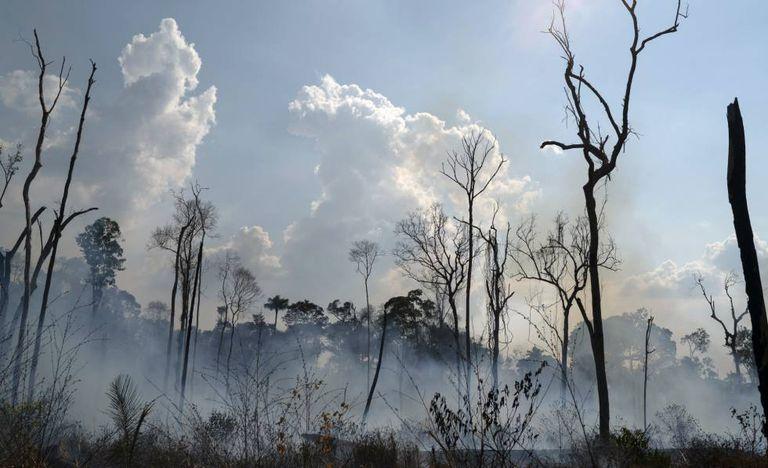 Fogo consome floresta em Novo Progresso, no Pará.