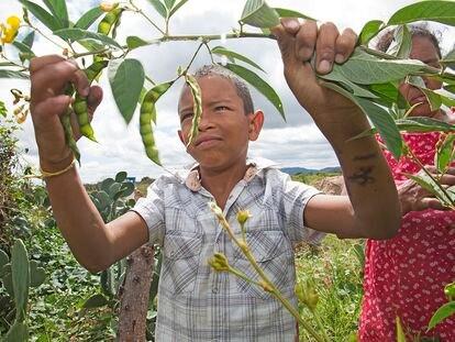 Projeto de agricultura familiar em Jaguarari (BA).