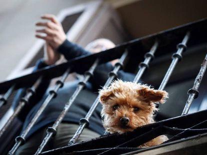 Um cachorro numa sacada de imóvel em Madri.