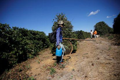 Trabalhador durante fiscalização em fazenda de café em Minas Gerais, em agosto de 2019.