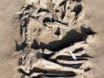 Los esqueletos unidos en un abrazo hallados en Mantua (Italia).