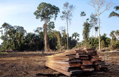 Tábuas de madeira obtidas em desmatamento ilegal na zona protegida.