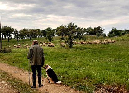 Horácio cria suas ovelhas na aldeia de Santa Margarida da Serra, no Alentejo (Portugal).
