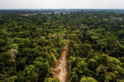 Ramal madeireiro corta a floresta amazônica. Este é um dos primeiros estágios de degradação e exploração posto em prática pelas quadrilhas que agiam na região.