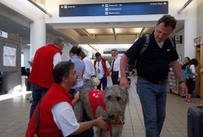 Terapia com animais no aeroporto de Los Angeles.