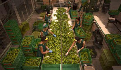 Trabalhadoras encaixotam alimentos numa fábrica de Granada.