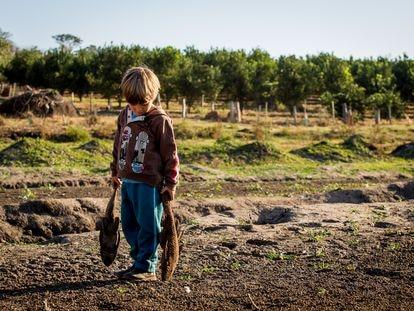Rafael, 3, carrega peixes secos no local onde ficava o açude na propriedade arrendada pela família em Estrela D'Oeste, São Paulo