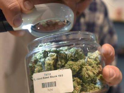 Um homem examina a maconha numa loja do produto, em Portland, Oregon.
