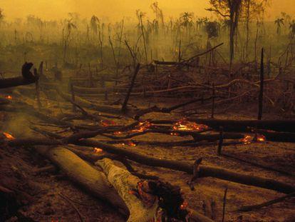 Desmatamento e mudança climática, em 10 imagens