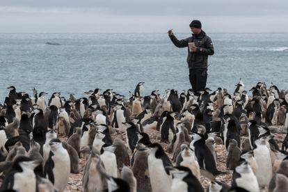 O cientista Noah Stryker conta o número de pinguins.