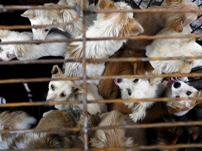 Vários cachorros em uma jaula de um mercado asiático.