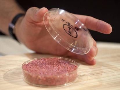 Carne cultivada em laboratório a partir de células-tronco de vaca.
