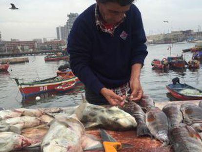 Uma peixaria no porto da cidade chilena de Antofagasta.