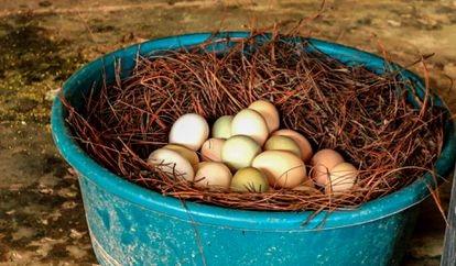 Ovos produzidos no Corredor Seco (Guatemala).