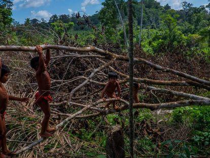 Crianças wajãpi brincam na floresta amazônica.