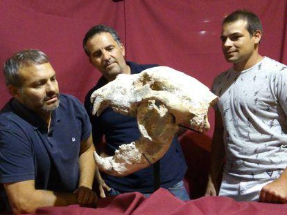 Crânio e mandíbula do 'Arctotherium angustidens' encontrados em San Pedro (Argentina).